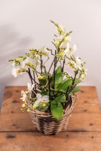 Zimmerpflanzen (4)